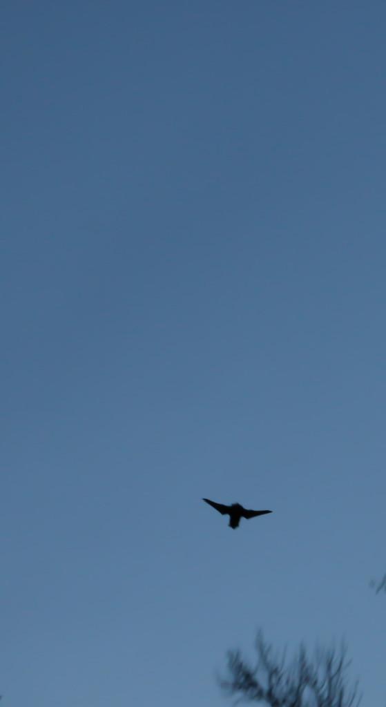20131206-bolin bats-0755