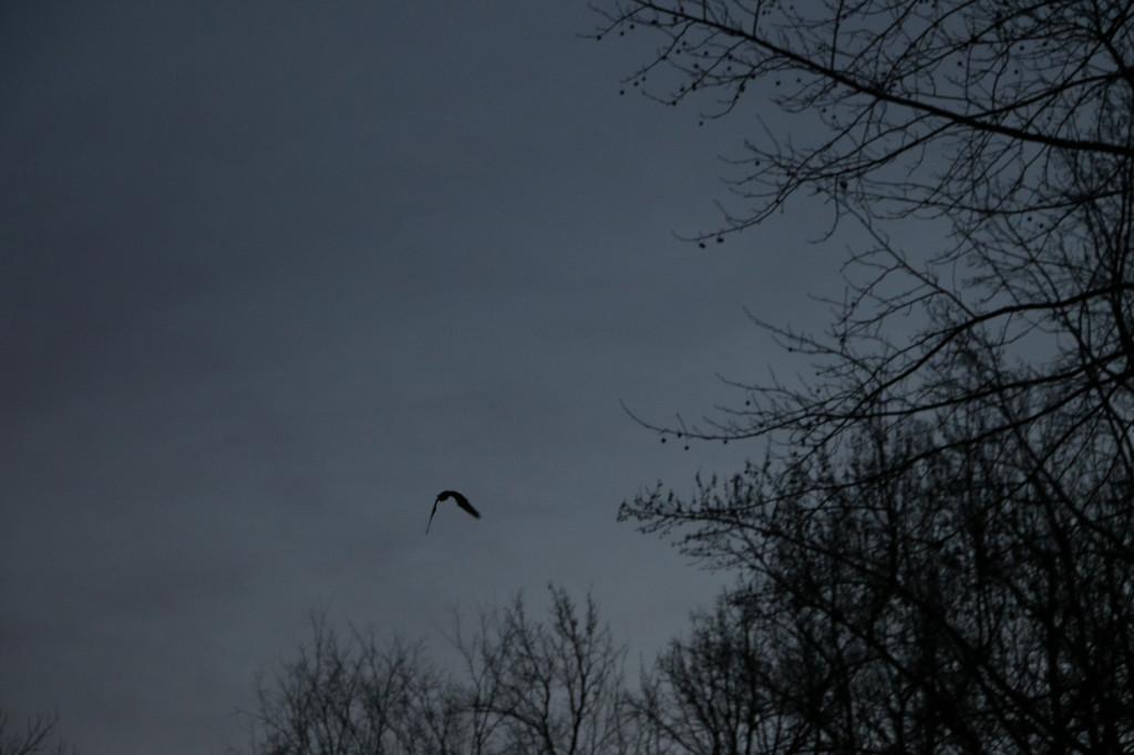 20131206-bolin bats-0789