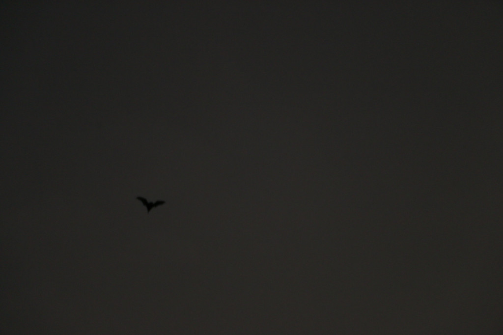 20131206-bolin bats-0805