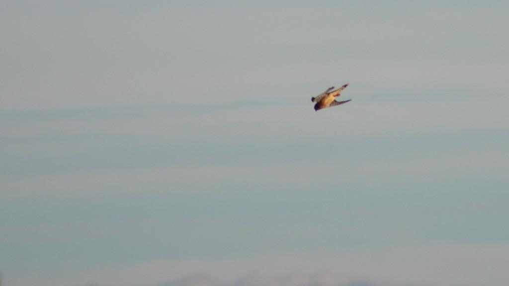 20131215-saxapahaw bird-0941