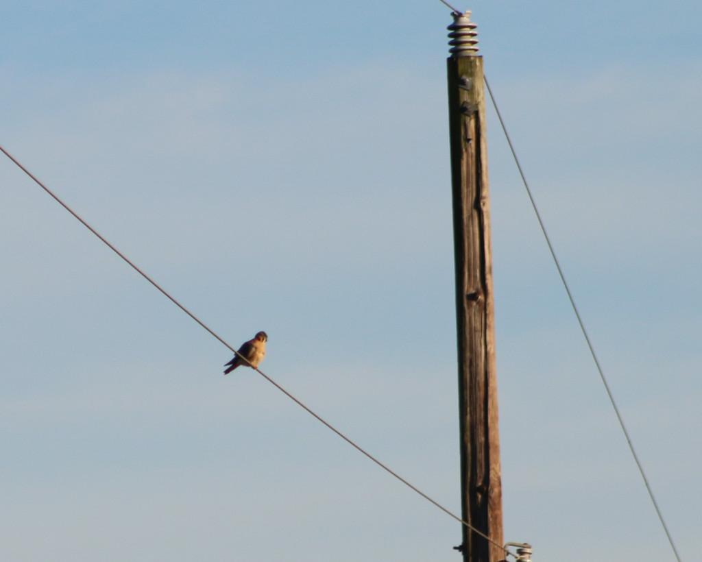 20131215-saxapahaw bird-0942